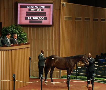 Hip 956,  2012 Keeneland September Yearling Sale
